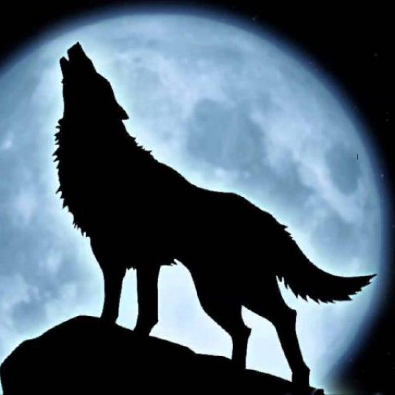 Bad Wolf 13
